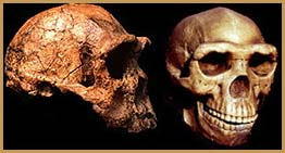 erectus-two-skulls.jpg