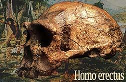 erectus-title.jpg